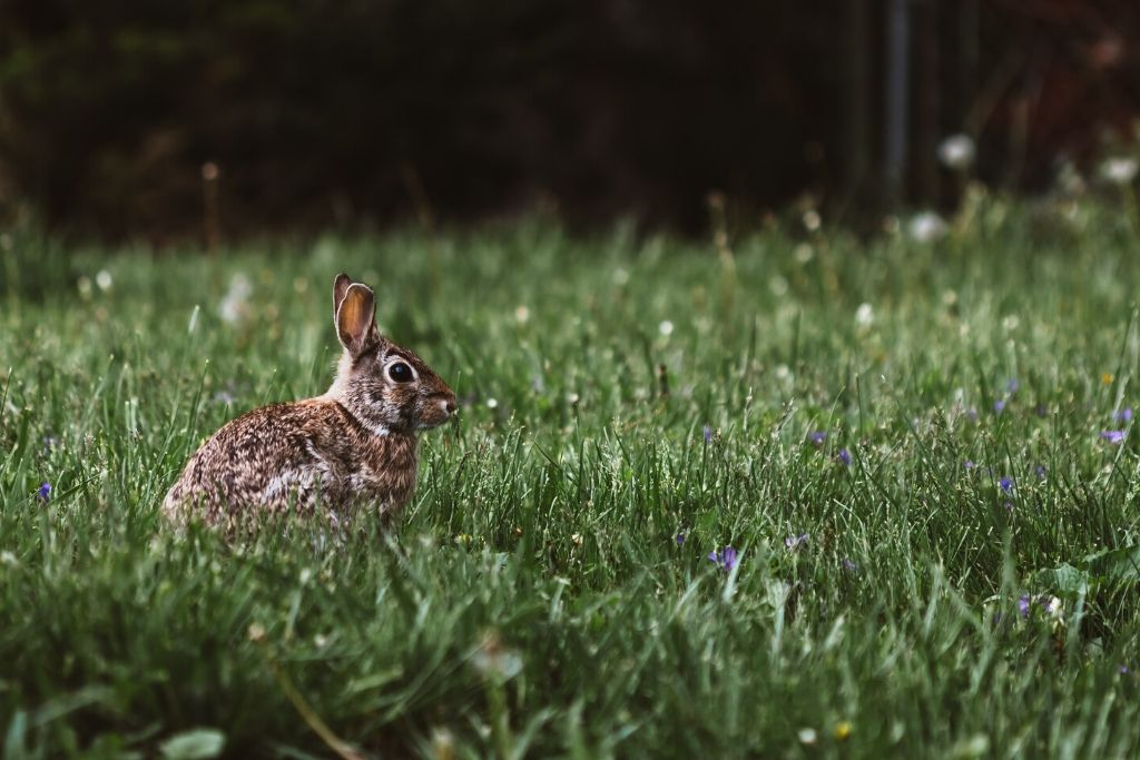 rabbit in the middle of the fields